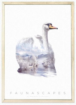 Faunascapes Poster Print Swan