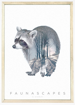 Faunascapes Poster Print Raccoon