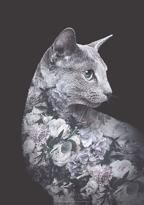 Faunascapes Flower Portrait Silver Cat