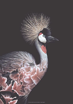 Faunascapes Crowned Crane Flower Portrait Art Print