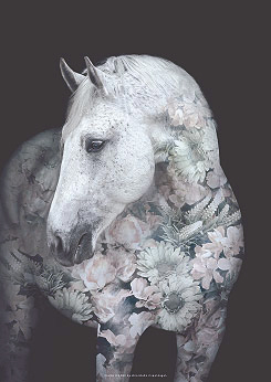 Faunascapes Andalusian Horse Flower Portrait Art Print