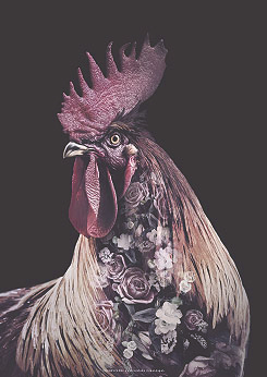 Faunascapes Burgundy Rooster Flower Portrait Art Print